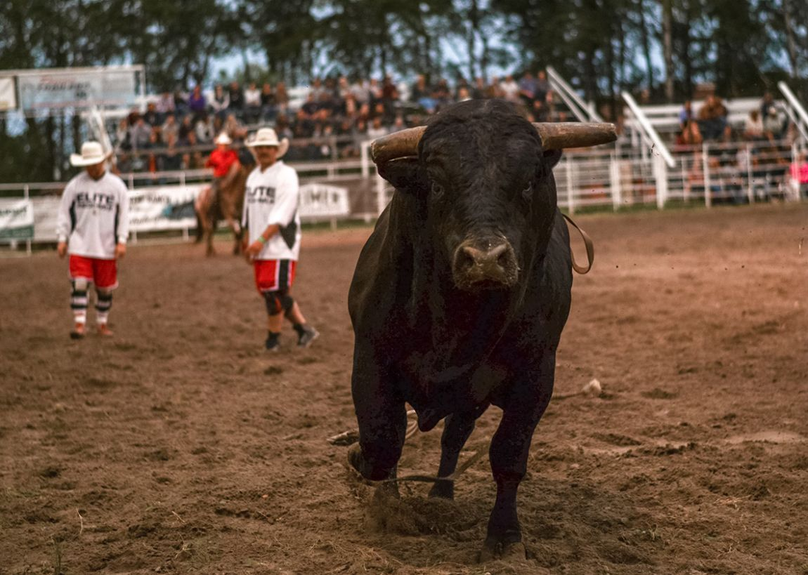 Hanover Ag's Bull Riders Canada Invitational (Friday)